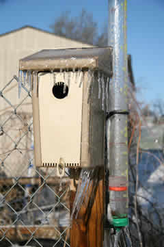 Frozen bird house