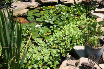 Small pond growth